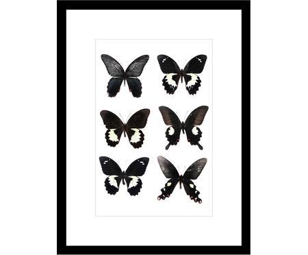 Oprawiony druk cyfrowy Butterflies Dark